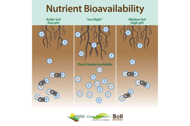 Soil phosphorus availability and lime: More than just pH?