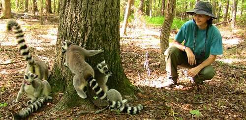 Some lemurs are loners, others crave connection