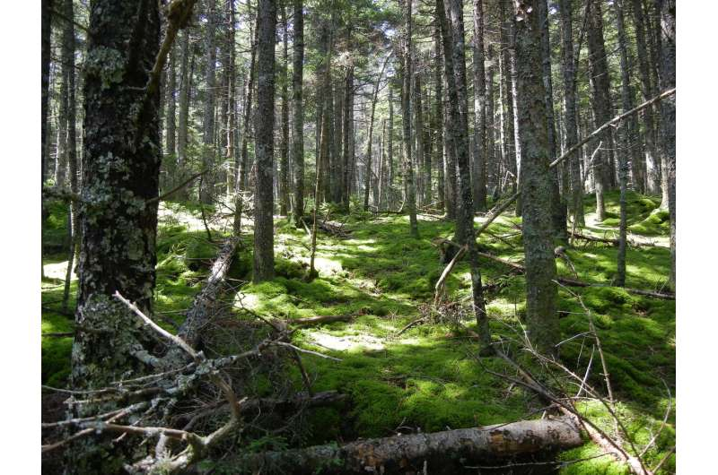 Thanks to climate change & wetter weather, forest soils are absorbing less methane