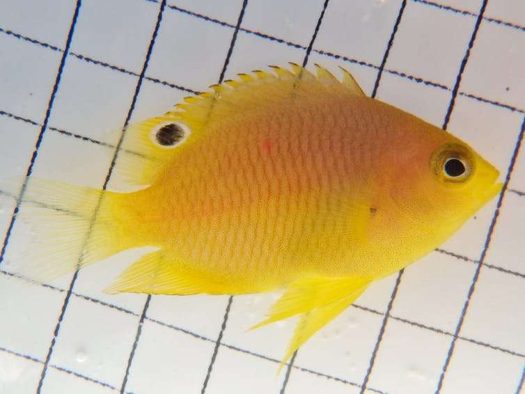 The fishy problem of underwater noise pollution