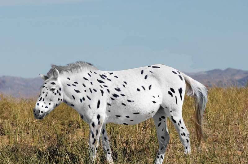 Unsaddling old theory on origin of horses
