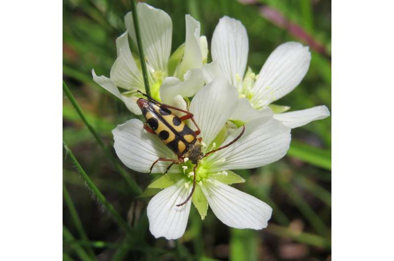 Venus flytraps don't eat the insects that pollinate them