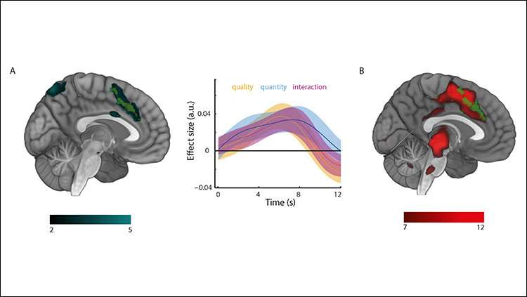 Where the brain turns quality and quantity into value