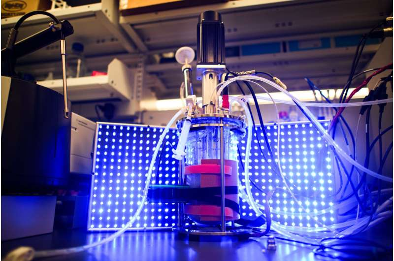 Researchers use light to turn yeast into biochemical factories