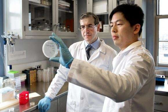 Researchers identify new class of antibiotics with potential to fight 'superbugs'