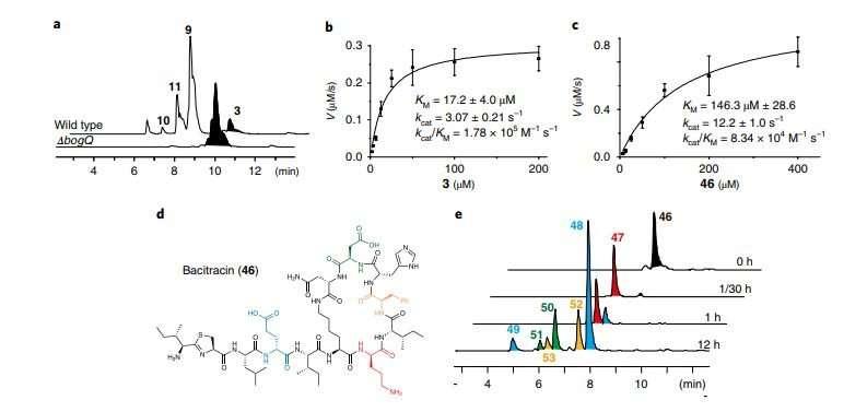 Scientists discern new antibiotics resistance mechanism to peptide antibiotics