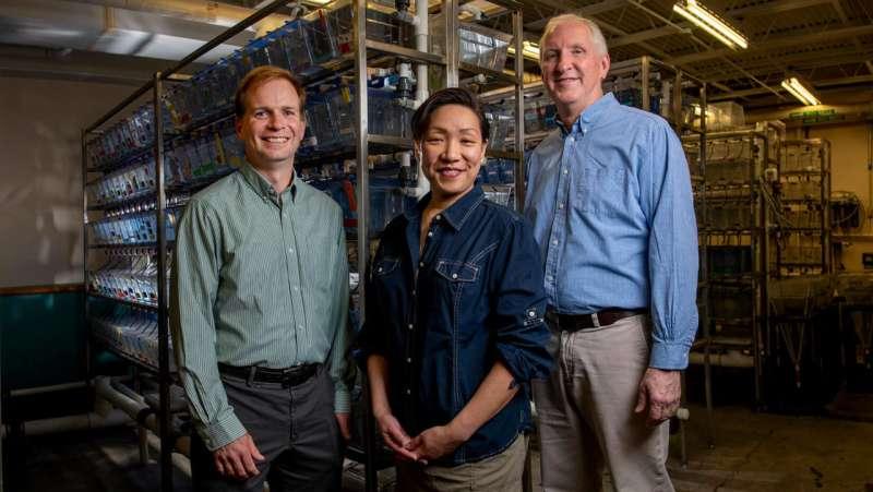 Understanding immune response to flu virus key to developing new treatments