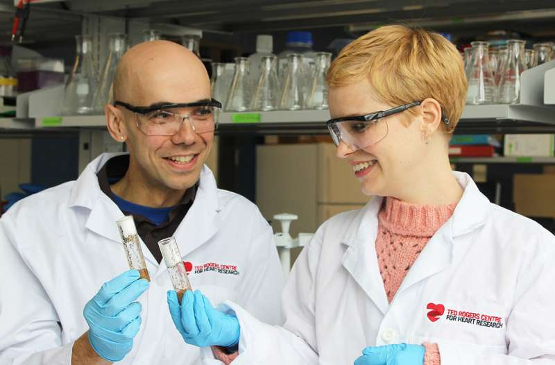 Researchers uncover mechanism of scar-free wound healing in fruit fly embryos