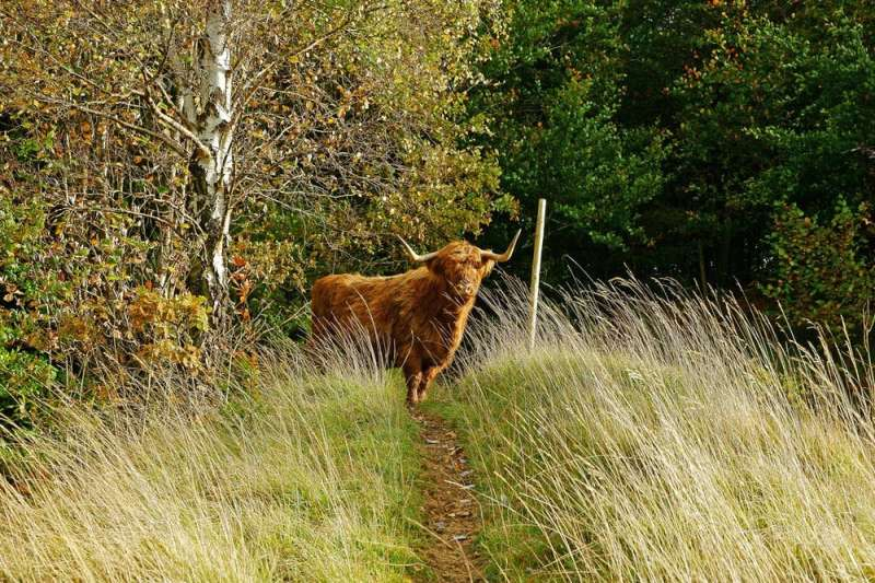 Agroforestry can help the UK meet climate change commitments without cutting livestock numbers
