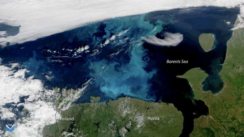 Arctic sea ice decline driving ocean phytoplankton farther north