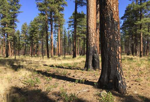 Experts seek ways to boost extreme wildfire survival rates