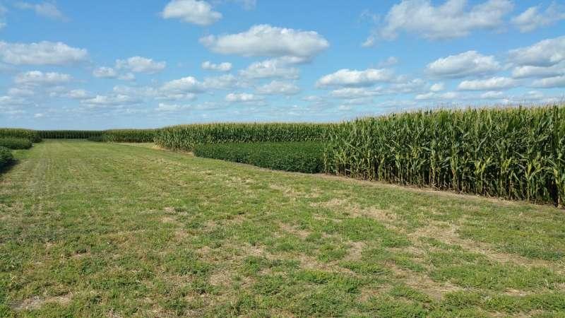 Un estudio a largo plazo muestra que la rotación de cultivos reduce las emisiones de gases de efecto invernadero