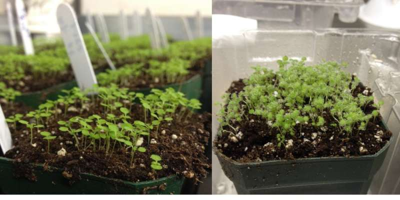 Pathogens attack plants like hackers, so my lab thinks about crop protection like cybersecurity