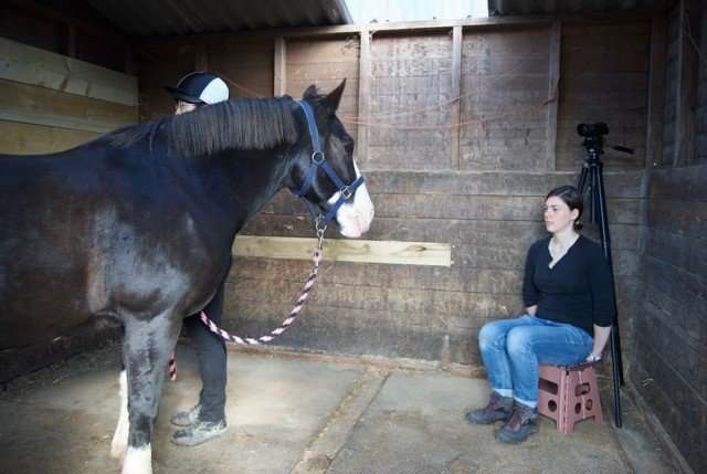 Study finds horses remember facial expressions of people they've seen before