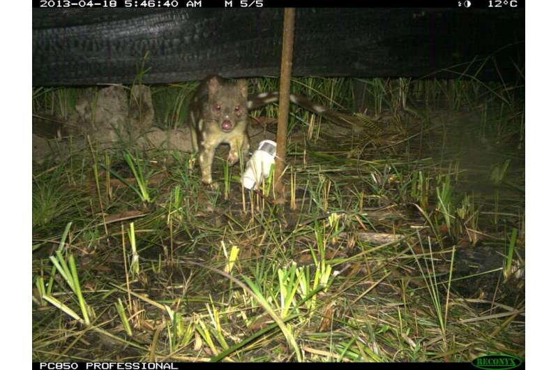 The privacy problem with camera traps: you don't know who else could be watching