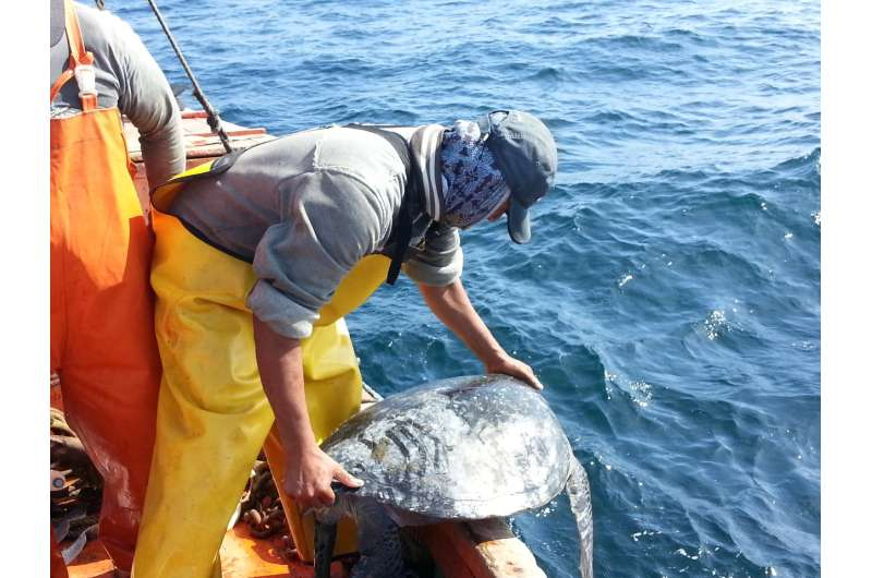 Thousands of turtles netted off South America
