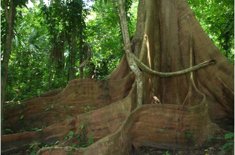 Tropical forests may soon hinder, not help, climate change effort