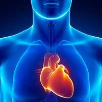 Study reveals a new indicator of survival outcome after cardiac arrest