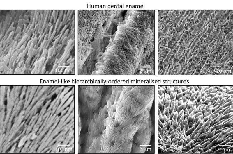 Scientists develop material that could regenerate dental enamel
