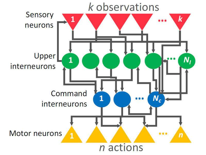 Artificial intelligence—parking a car with only 12 neurons