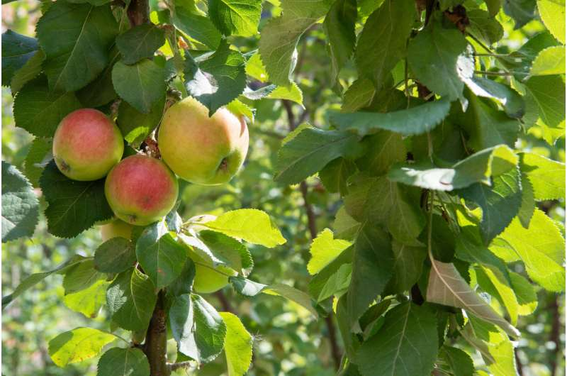 Global warming increases frost damage on trees in Central Europe