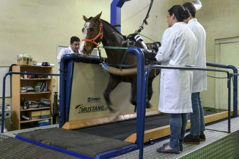 Researchers at the Genetics Veterinary Institute (IGEVET) at Argentina's La Plata University perform tests as part of a project