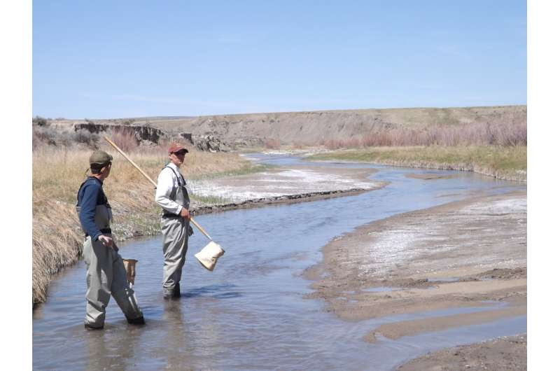 Researchers study aquatic beetles native only to central Wyoming