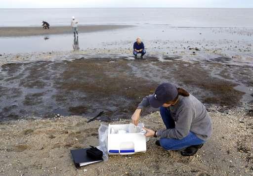 Bird flu hot spot: Scientists track virus in huge migration