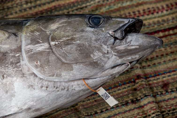 How blockchain is strengthening tuna traceability to combat illegal fishing
