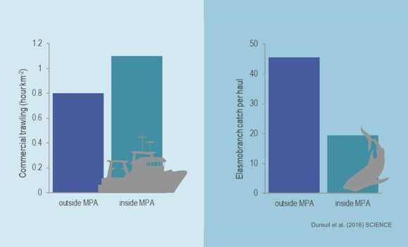 Industrial fishing in marine protected areas poses significant threats to endangered sharks and other species