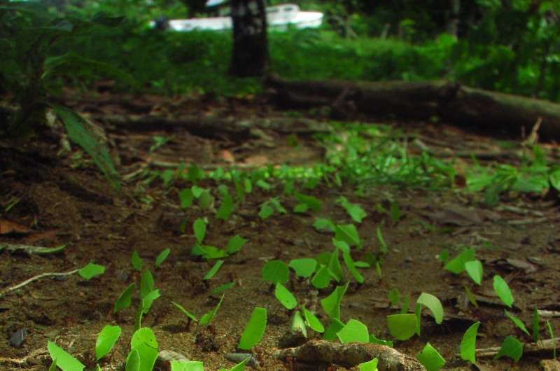 Leafcutter ant colonies may be an overlooked source of carbon dioxide emissions, new study finds