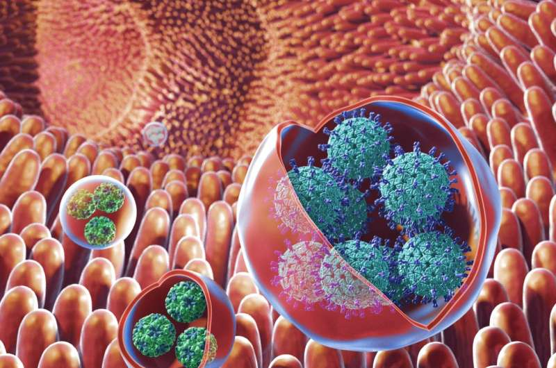 NIH researchers discover highly infectious vehicle for virus transmission among humans