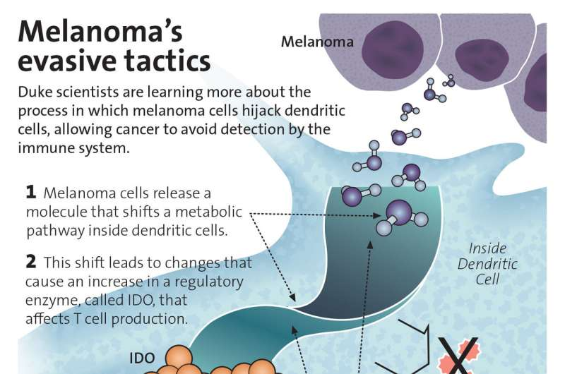 Researchers identify new way to unmask melanoma cells to the immune system