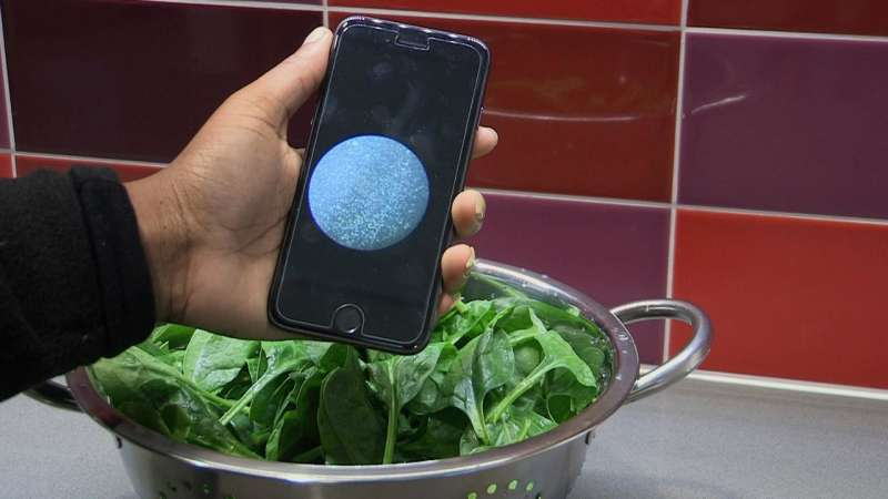Scientists developing new, low-cost tool for detecting bacteria in food and water
