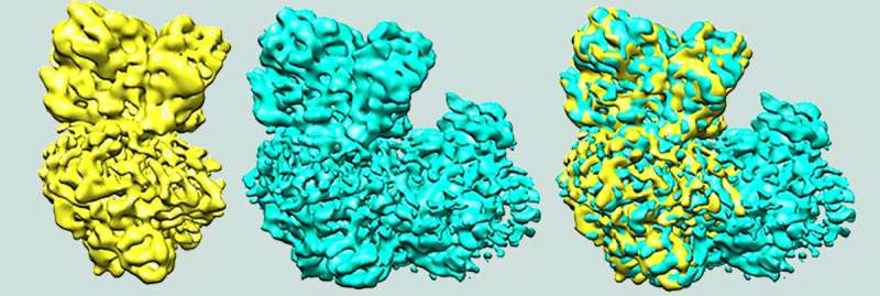 Study shows how bacteria guide electron flow for efficient energy generation
