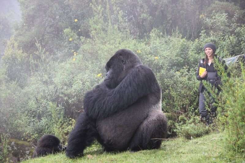 Understanding group relationships in gorillas