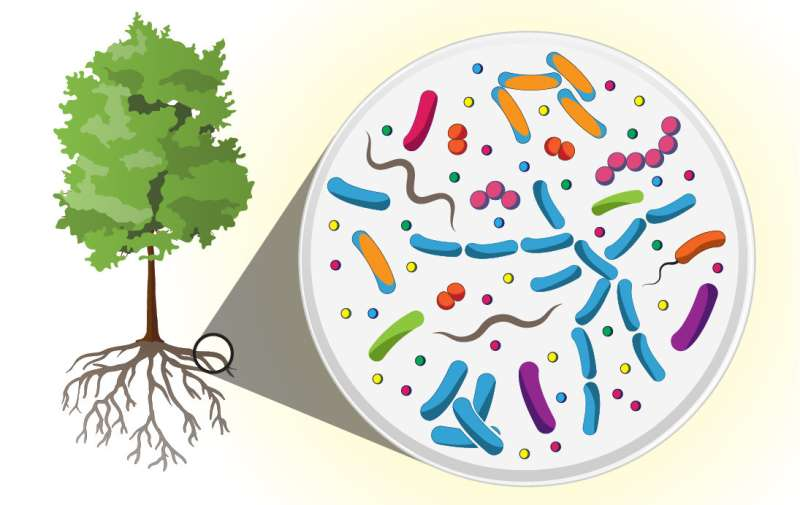 Scientists find great diversity, novel molecules in microbiome of tree roots