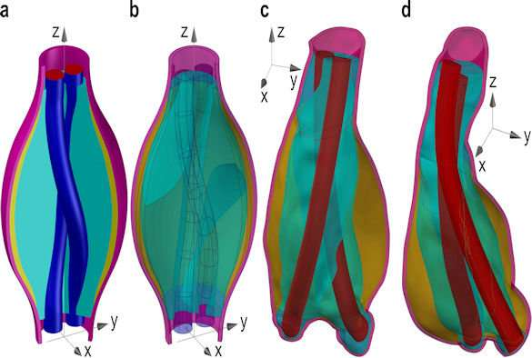 Mathematicians devise new model to study response of endovascular aneurysm sealing