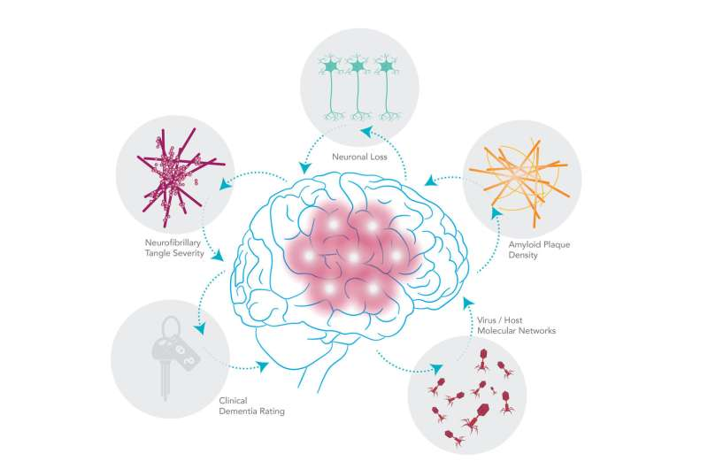 New study suggests viral connection to Alzheimer's disease