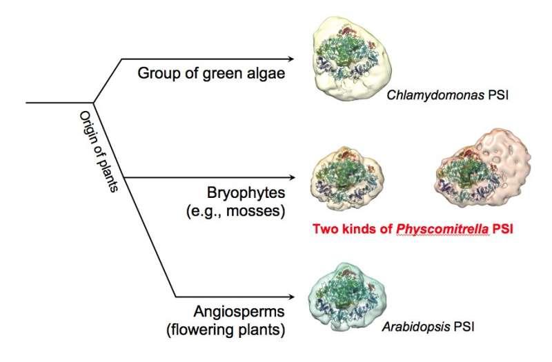 Photosynthesis like a moss