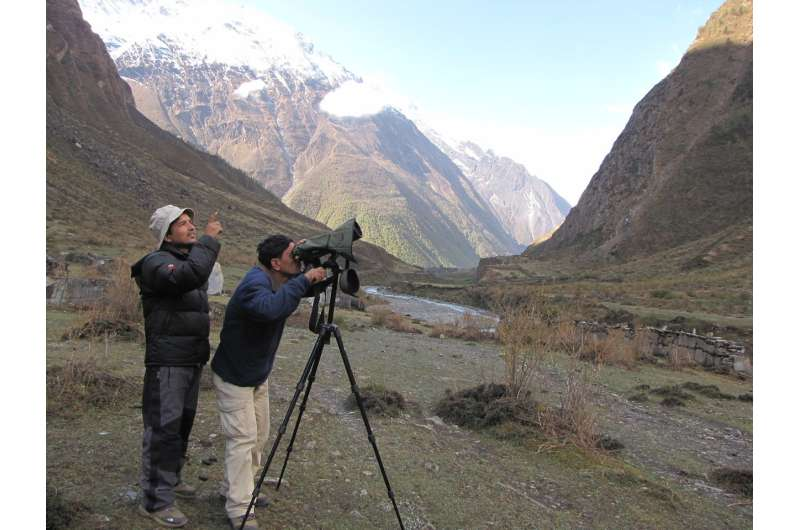 Research suggests low density of snow leopards in Nepal's Conservation Area
