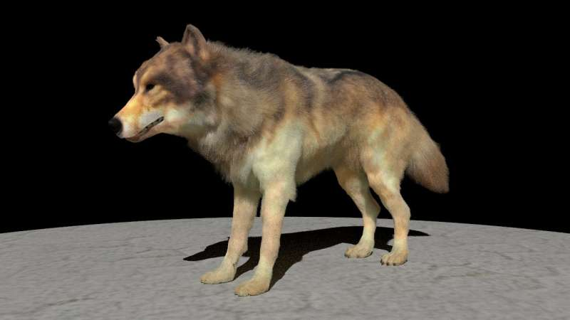 Scientists improve computer rendering of animal fur