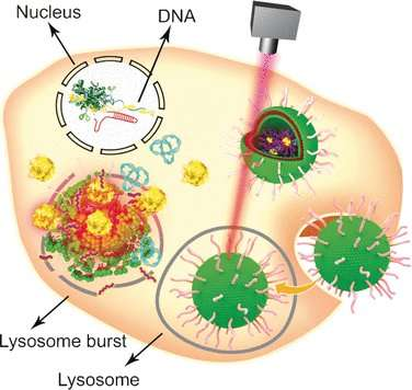 Thermo-triggered release of a genome-editing machinery by modified gold nanoparticles for tumor therapy