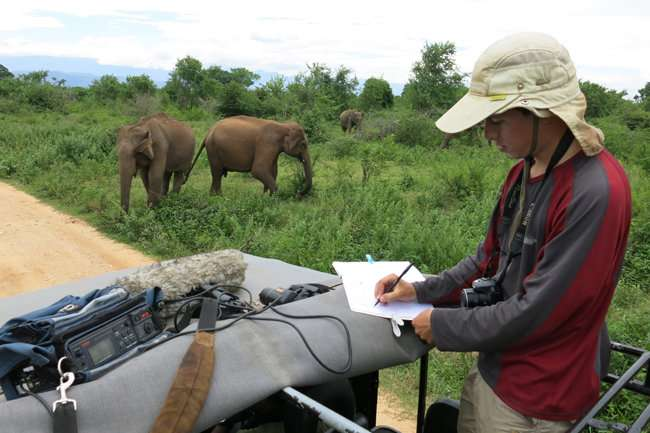 Wild Sri Lankan elephants retreat from the sound of disturbed Asian honey bees