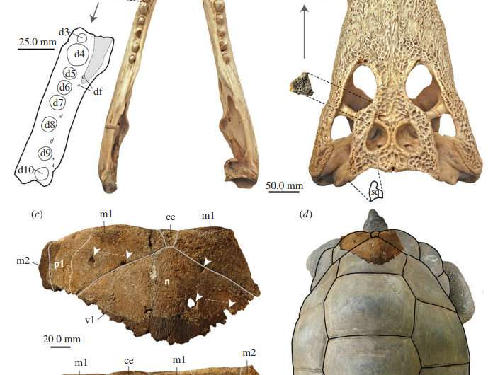 Giant tortoises on Aldabra Atoll may have been had to ward off crocodiles during the late Pleistocene