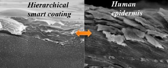 Skin-inspired coating that's as hard as teeth and can heal itself