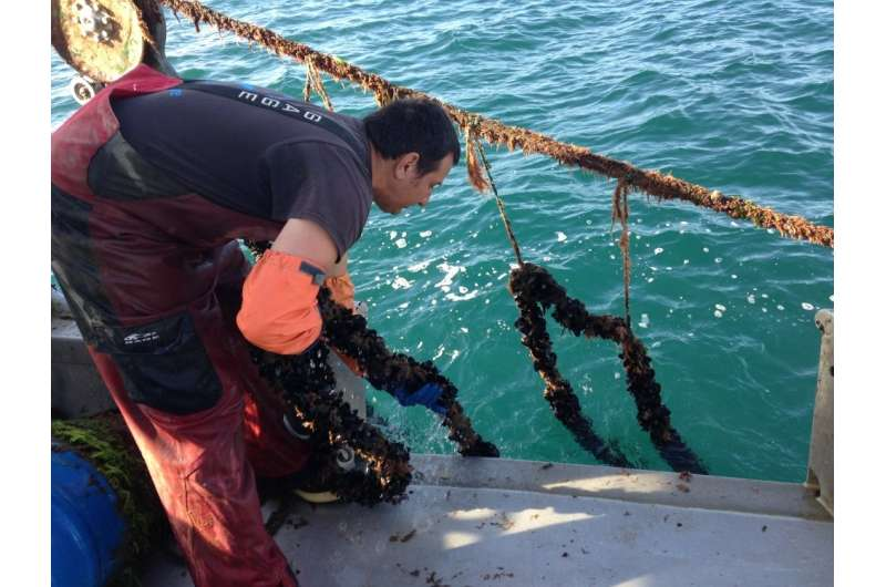 Researchers model tradeoffs and opportunities for aquaculture development in the Southern California Bight