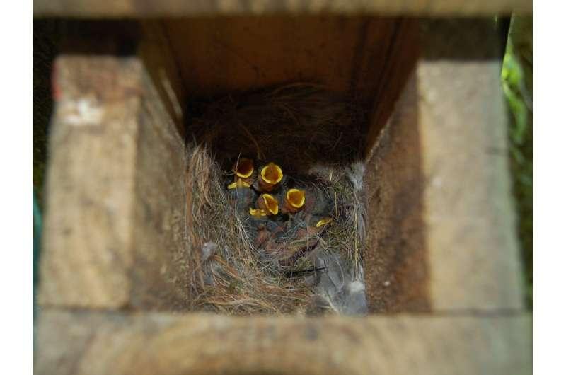Avoid south-facing birdhouses -- for the nestlings' sake