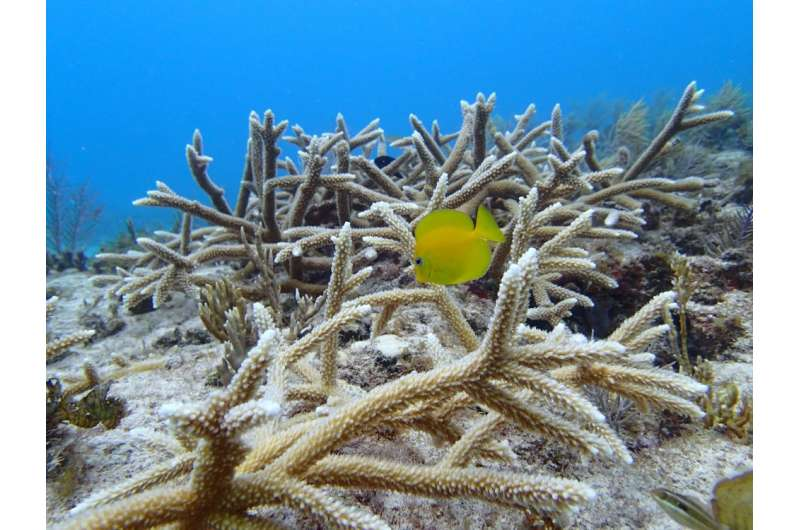 Incorporating natural processes to exploit ecological forces and drive recovery of coral reef ecosystems is imperative