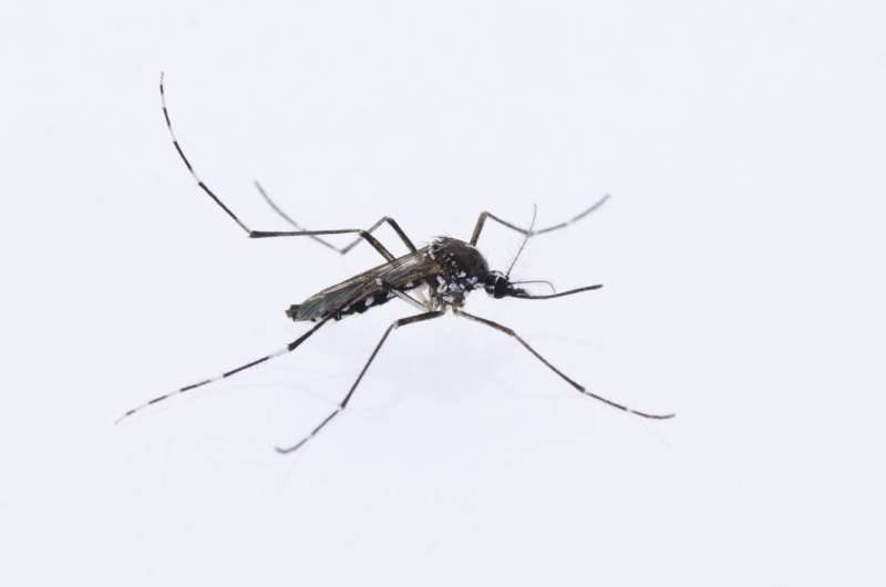 Asian tiger mosquito on the move